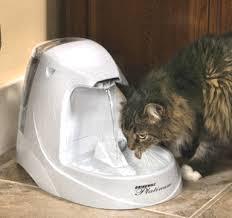цистит у кошек и котов