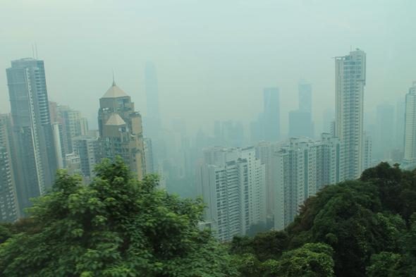 Гонконг зелень фото