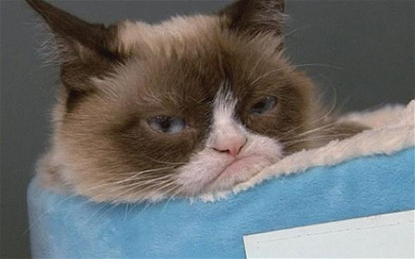 сварливый кот