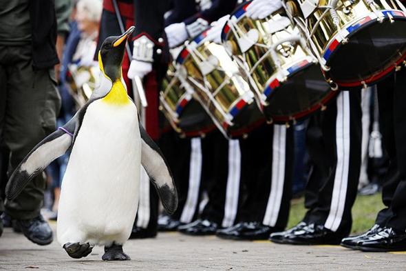 пингвин Нильс Улаф II