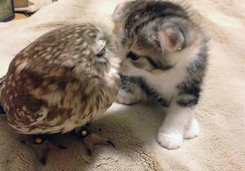 котенок и совенок лучшие друзья