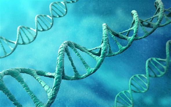 генетика и старение