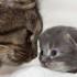 Данные о кошках: максимальный возраст кошек