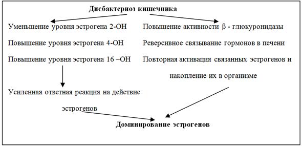 дисбактериоз кишечника и эстрогены