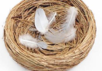 Пустое гнездо
